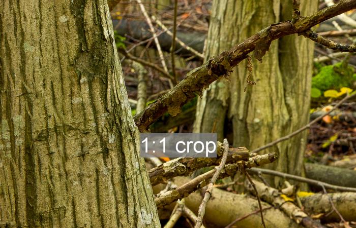 1:1 crop